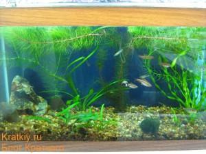 Фото аквариума на работе от 13.10.2009 - Общий план